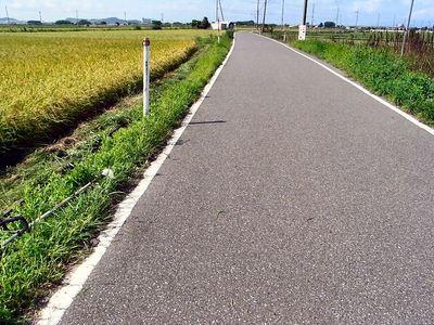 県道の草刈り