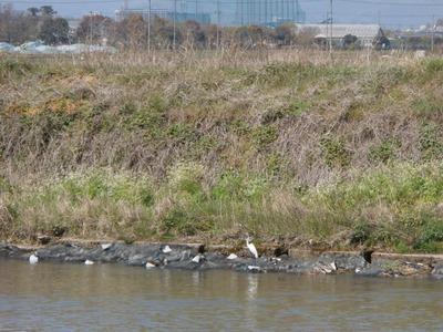 天野川の護岸