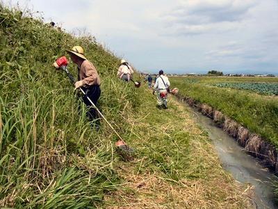 排水路管理用道路除草