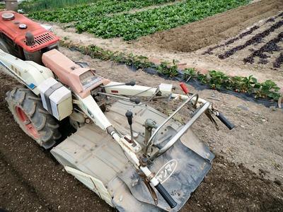 サツマイモの植付準備