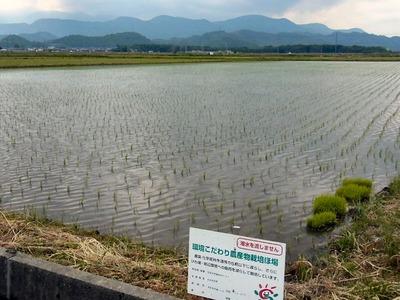 田んぼの水