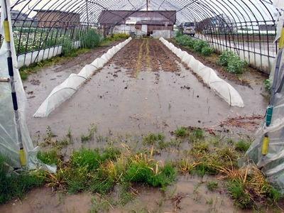 水びたしになった畑