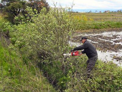 水路溝畔雑木の伐採1