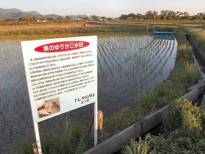 魚のゆりかご水田看板