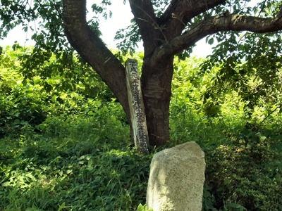 卒業記念植樹の碑