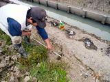 水路溝畔の穴を調査
