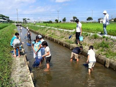 水生生物観察会寺川