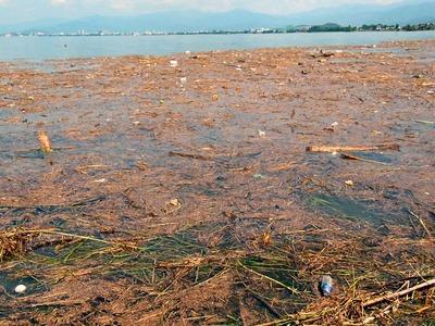 湖岸に押し寄せたゴミ