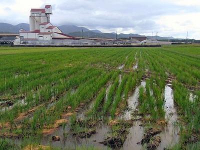 土壌試料採取2