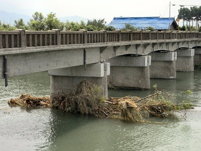 朝妻橋の橋脚に引っかかった柳の木