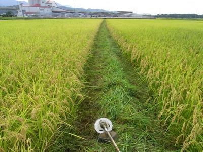 畦草刈り2