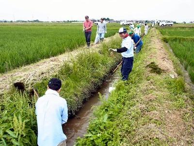 農業排水路泥上げ2