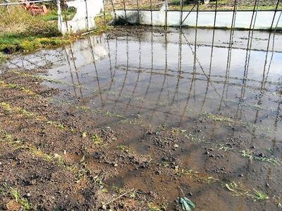 冠水した畑