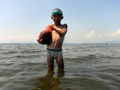 貝が採れた