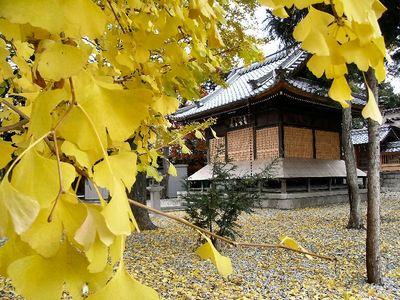 春日神社と銀杏