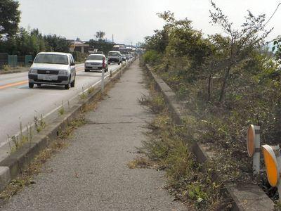 湖岸道路の雑木対策