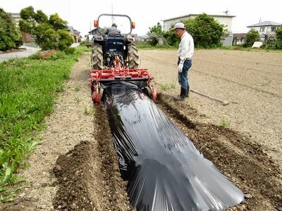 ふれあいサツマイモ農園の準備作業