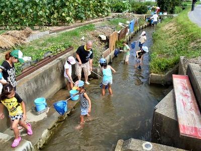 水生生物観察会大川