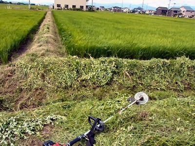 草刈り(畦畔)