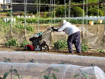母と耕運機