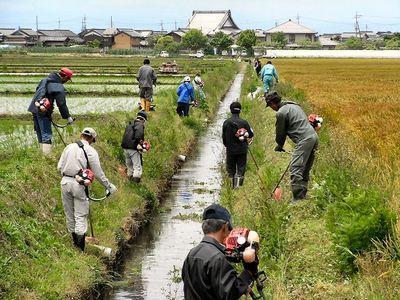 水路溝畔除草