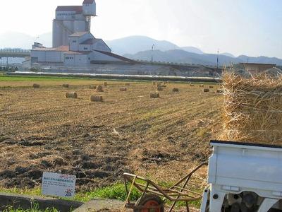 稲わらロールの回収