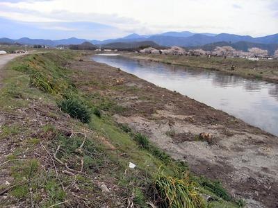 天野川の雑木伐採