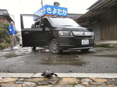 街宣車の前を亀が横断