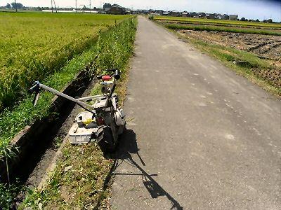 通学路の草刈り