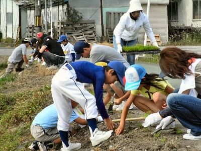 子どもたちは通学路に植栽