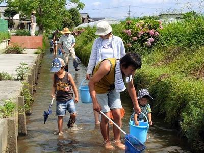 水生生物観察会新川