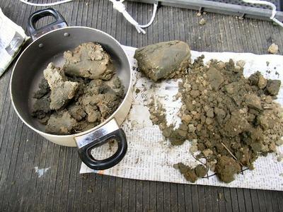 土壌診断1