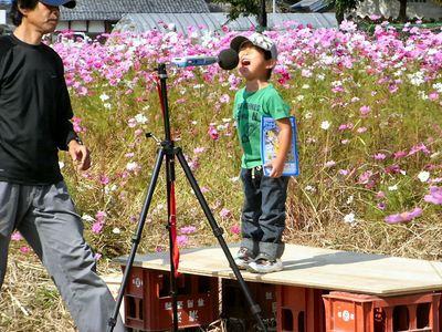 コスモス畑で大声コンテスト