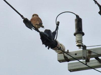 電線にとまった鳥