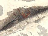 剥がれ落ちた天井の一部