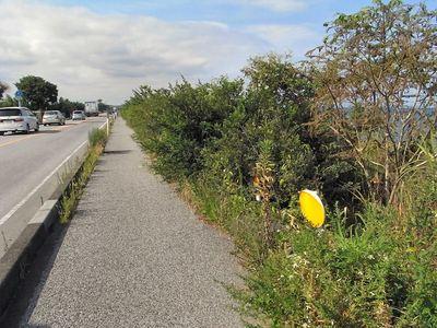 湖岸道路の危険な歩道