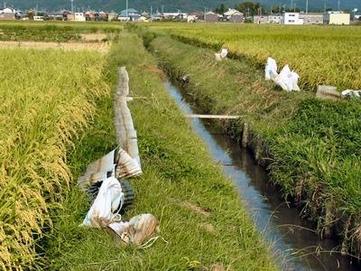 稲刈りの準備