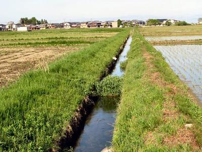 排水路の雑草