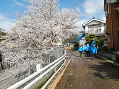 桜の下の訴え