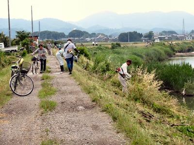 天野川堤防の草刈り