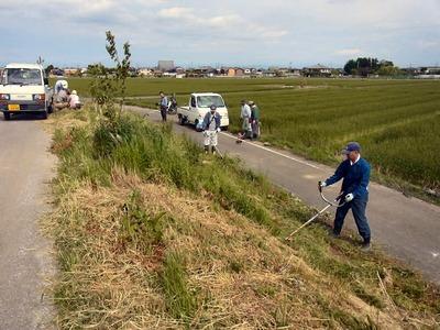 霞堤下農道の除草