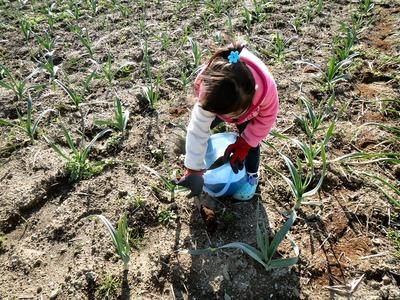 肥料の散布