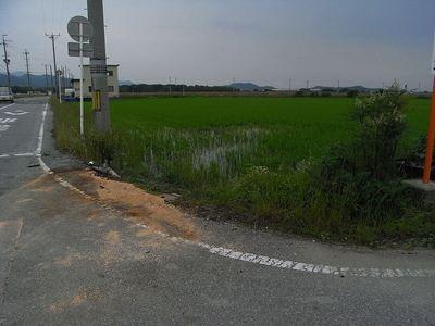 被害のあった田んぼ