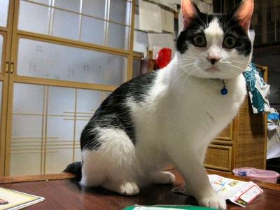 猫の名はシメジ