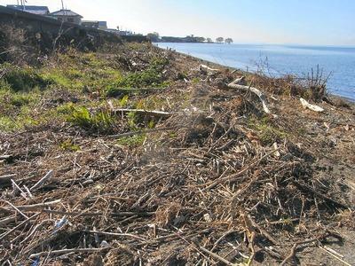 湖岸のゴミ