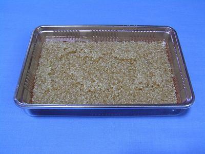 発芽玄米を作る2