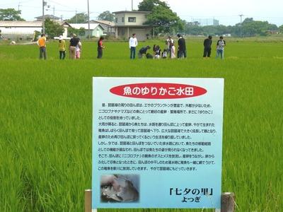 ゆりかご水田遠景