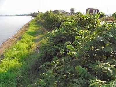 湖岸の雑木