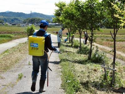 桜並木の維持作業