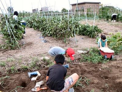 畑で遊ぶ孫たち